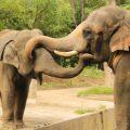 マストドンの象